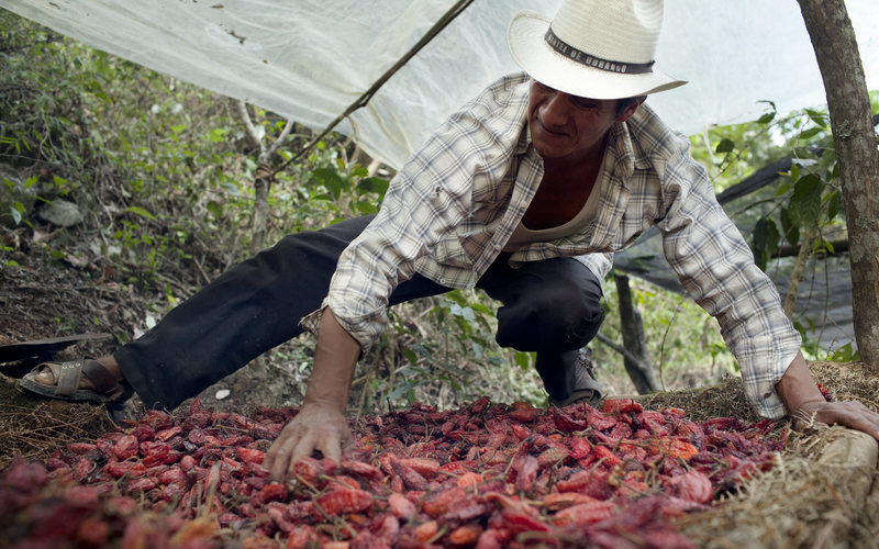 Saving the Prized Chile That Grows Only in Oaxaca's Mountains