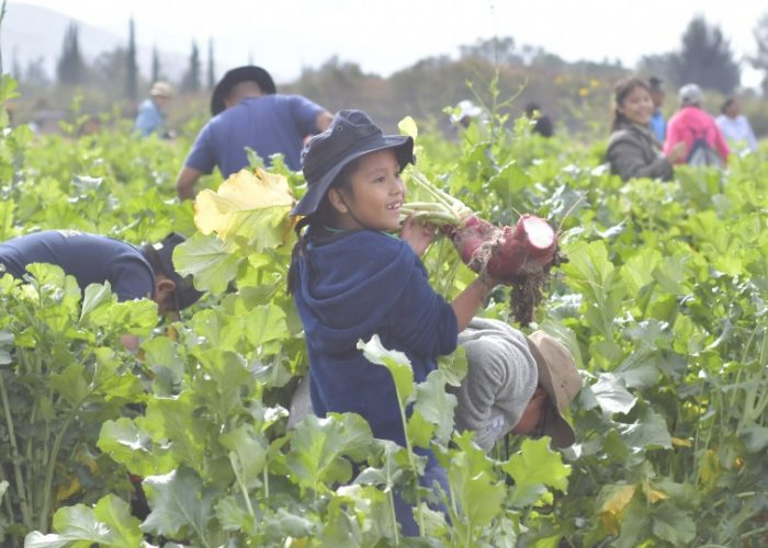 Children participate in the traditional Night of the Radishes in Oaxaca