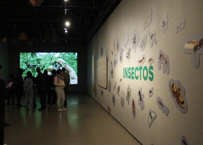 "From Oaxaca to the world: ""The art of eating insects"""
